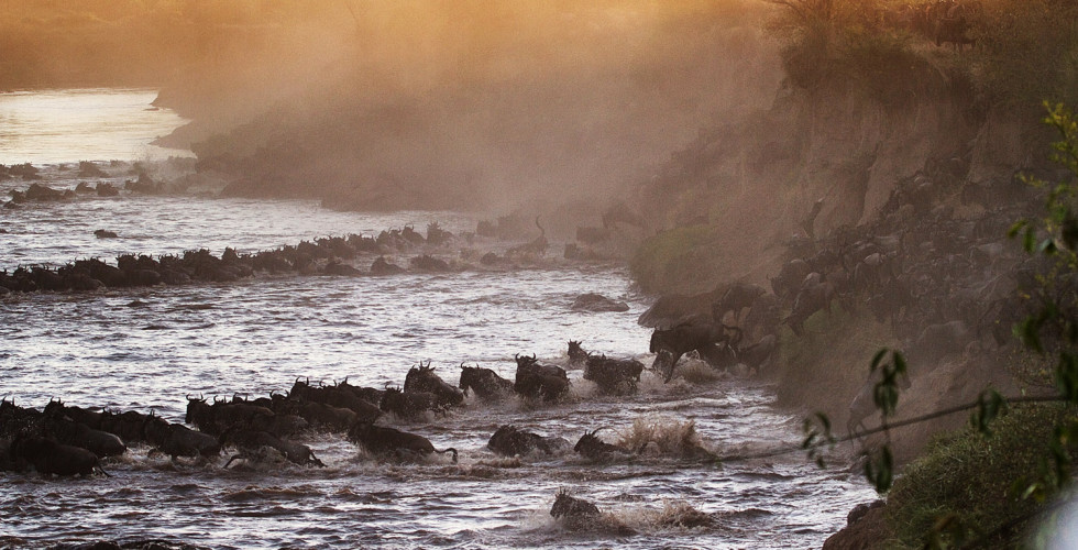 Alex Walker's Serian_Masai Mara_Serengeti Migration