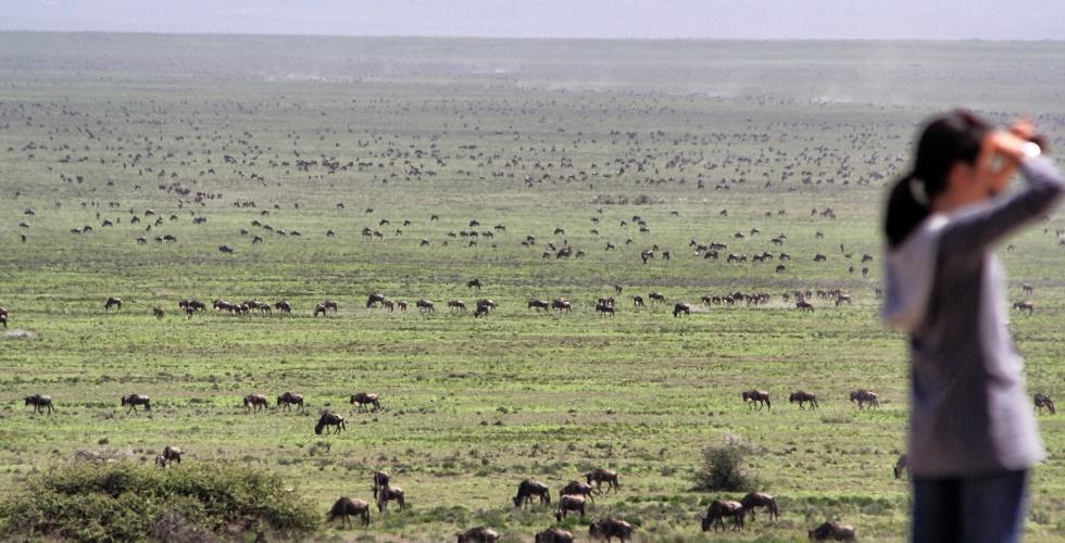 Serengeti Crowds