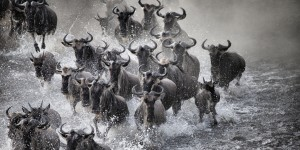 The Great Migration (Video)