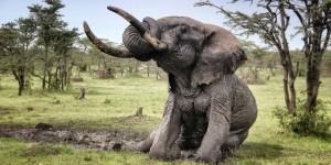 Elephant Bulls – Bath Time!
