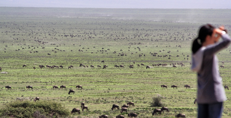 Serengeti Crowds
