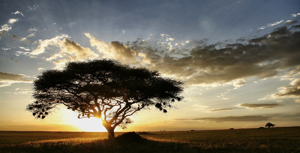Alex Walker's Serian_Masai Mara_Serengeti sunset