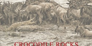 Crocodile Rocks