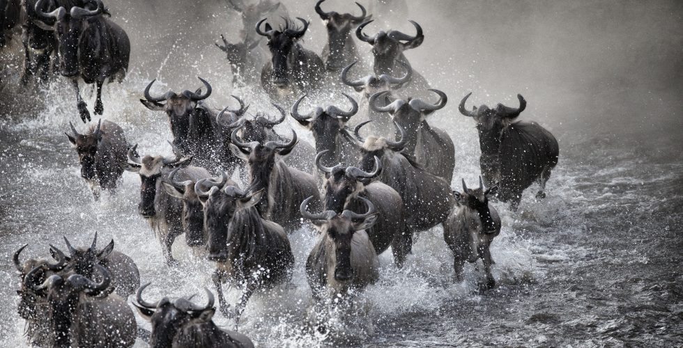 Photography Workshops The Great Migration - Serengeti River Crossings