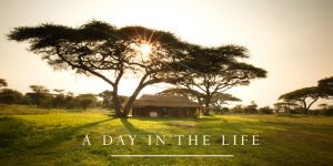 A Day in the Life – A short film by Eliza Powell