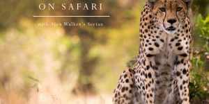 On Safari – Alex Walker's Serian (a short film)