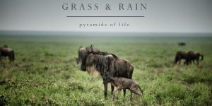 Pyramids of Life – Grass and Rain